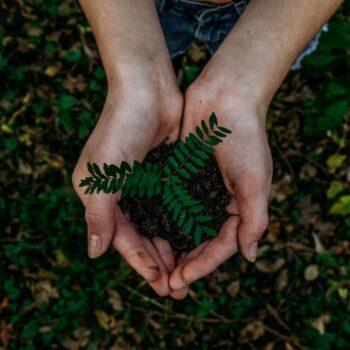 eco friendly organizing tips